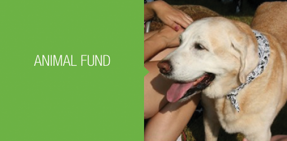 ht for animals fund well